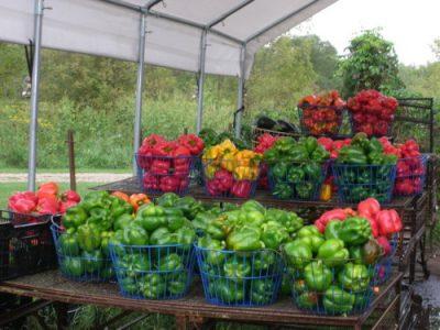 Guldan Family Farm buckets of peppers