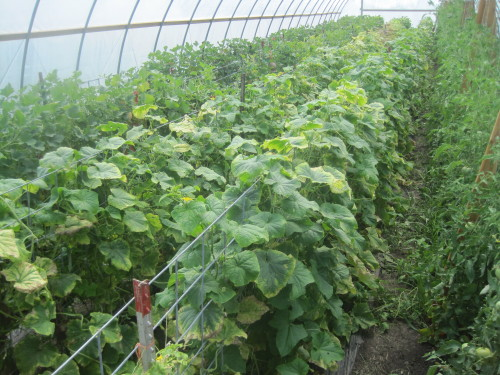 My MN Farm-5