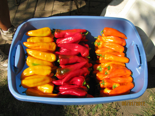 Musser Produce Peppers