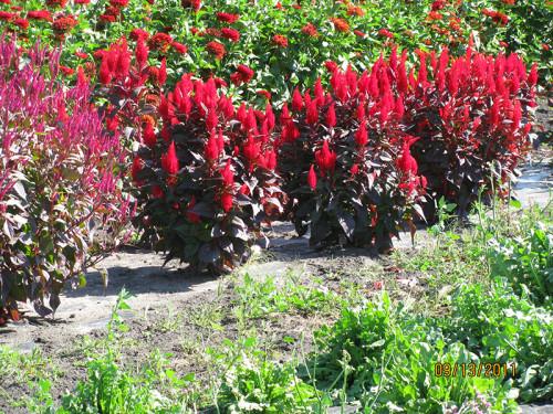 Musser Produce flowers