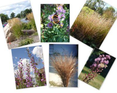 Wild Prairie Nursery-3