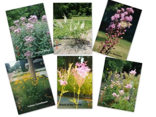 Wild Prairie Nursery background flowers