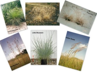 Wild Prairie Nursery grasses