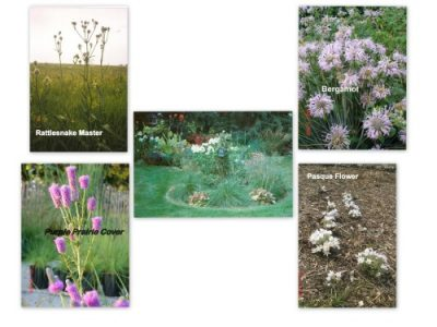 Wild Prairie Nursery small to medium flowers-2
