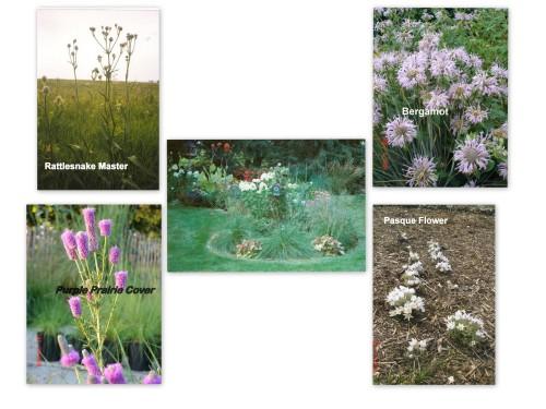Wild Prairie Nursery small to medium flowers-2