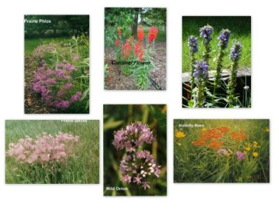 Wild Prairie Nursery small to medium flowers