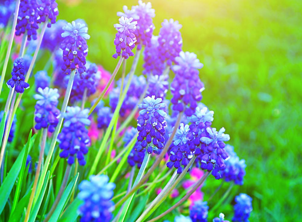 Annual/Perennial Plants